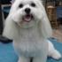 Poochitas Dog Salon & Spa