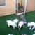 Pet Play House