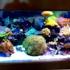 California Custom Aquariums