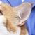 Crockett Veterinary Hospital