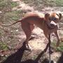 Tarheel Canine Training Inc