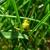 The-GrassHopper.Net Lawn Care