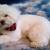Sophisti-Dog Grooming