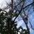 Alexander & Wilson Tree Care & Services
