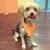 Earth Dog Spa and Apawthecary