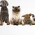 Denegar Kennels & Pet Pickup Service