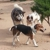 Dusty Dog Ranch Critter Care