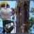 Tammany Tree Service