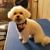 Kara's Dog Grooming
