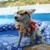 GoodFellas Doggy Daycare