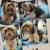 Spa2Go Pet Grooming