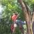 Red Arbor Tree Care