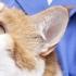 Cat Clinic Of Oklahoma City
