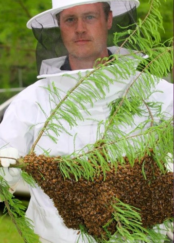 Bee Removal - Wildlife - Pest Control. J. Groppel with a swarm of honeybees!