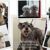 DbarE Pet Grooming LLC
