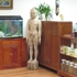 Lisa's Acupuncture Clinic
