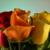 Aiea Florist