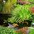 Green Source Landscapes