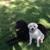 San Antonio Premier Pet Sitters