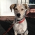 Crazy Good Pet Care and Dog Training, LLC