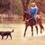 "Double ""O"" Ranch Horse Boarding & Horseback Riding Lessons"