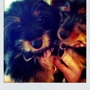 Elite Pet Sitters - Fort Lauderdale, FL