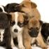 Beverly Oaks Animal Hospital & Pet Resort