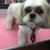 Poochinis Mobile Pet Salon