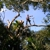 All American Tree Services & Landscaping of South Florida