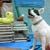 Classy Lassies Mobile Dog Spa