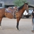 Cave Springs Horse Boarding
