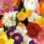 SuEllen  floral company