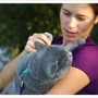 VCA All About Pets Animal Hospital