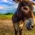 HorseSisters - H.E.A.T.