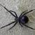 Spiders Vape Shop