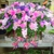 Charleston Cut Flower Company