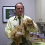 Alamo Heights Pet Clinic Inc - San Antonio, TX