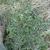 Intermountain Weed Control