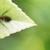 Maple Environmental Pest Control Inc