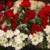 Roses Roses & More