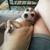 Joyful Bark Pet Sitting & Dog Walks