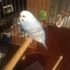 Furry & Feathered Friends Pet Sitting & Boarding - CLOSED