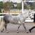 Del Lago Sporthorses