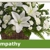 Jim Threlkel Florist
