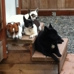 Home Away From Home Inc. K9 Daycare & Boarding
