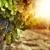 Napa Valley - Wine Tour