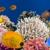 Bluewater Reef Aquatics
