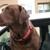 Shelby's Dog Treats