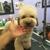 Dog Grooming & Supplies