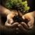 Andres Tree Service